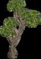 Eucalyptus Tree.png