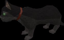 Overgrown cat (black) pet