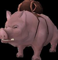 Pig (pet) beast of burden