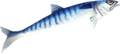 Raw seerfish detail.png