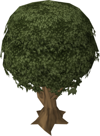 File:Sassafras tree.png