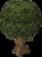 Sassafras tree.png
