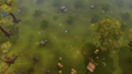 PHAS Northwest Ardy.png