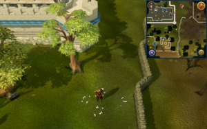 Compass clue Draynor south-east of Falador