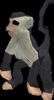 Baby monkey (black and white) pet