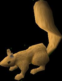 Squirrel (light brown) pet