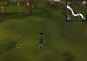 Compass clue Ardougne south-east of Fishing Guild