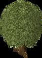 Oak tree old.png