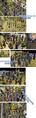 Thumbnail for version as of 13:46, May 24, 2009