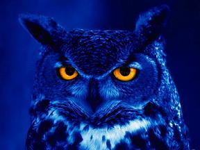 File:Nightowl Rs.jpg