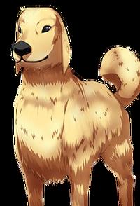 Dog RH