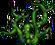 Thornroot Weed (104)