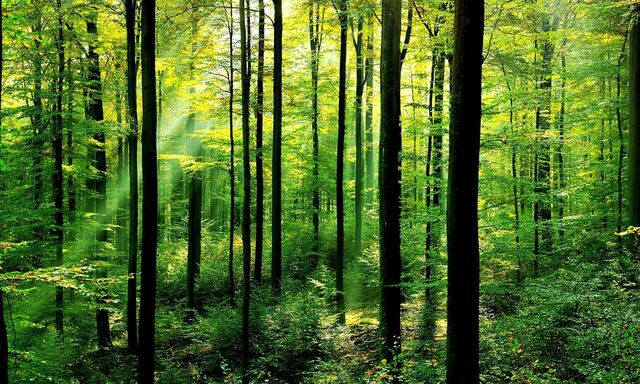 File:Forests-why-matter 63516847.jpg