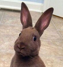 Awkward bunny original pic by ladyalt69-d7wyl2f