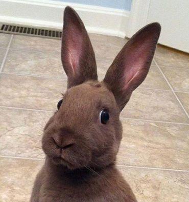 File:Awkward bunny original pic by ladyalt69-d7wyl2f.jpg