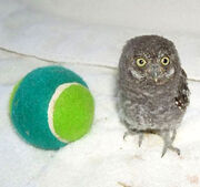 Lloyd and tennis ball