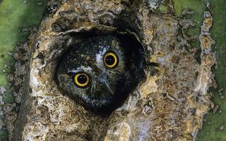 Birds-of-prey-wallpapers-8