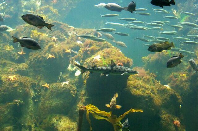 File:CAS-Aquarium1.JPG
