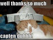 Duhhh cat