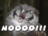 Nooooo owl