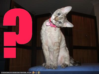 File:Question mark cat.jpg