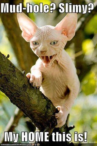 File:Yoda Cat - Mudhole.jpg
