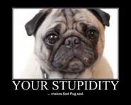 Motiv - stupidity sad pug 2