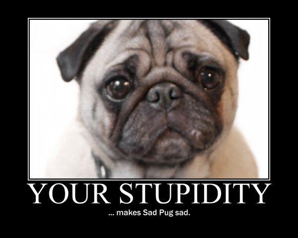 File:Motiv - stupidity sad pug 2.jpg