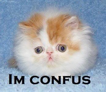 File:Confused lolcat.jpg