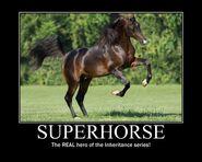 Motiv - superhorse