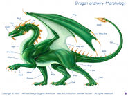 Dragon diagram