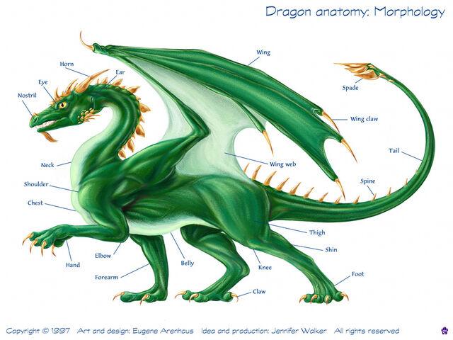 File:Dragon diagram.jpg