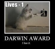 Motiv - darwin-award