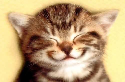 File:Kitten smile.jpg