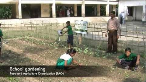 UN Joint Project in Bangladesh