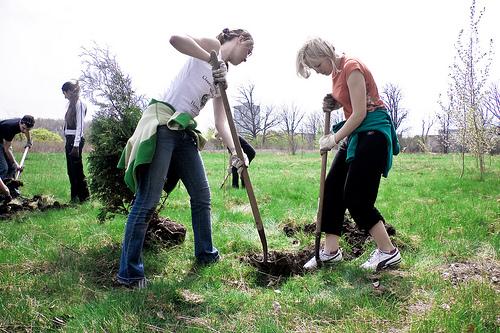 File:Tree planting.jpg