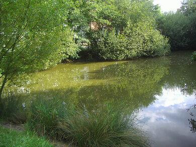 Hadley Green pond