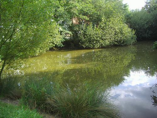 File:Hadley Green pond.jpg