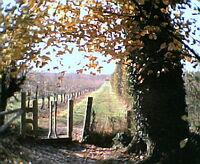 Orchardwalk1