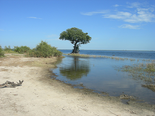 File:Chobe Riverfront, Botswana.jpg