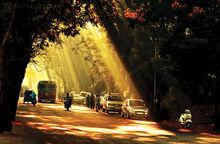 Aarey Road.jpg