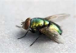 File:Fly.jpg