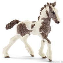 Tinker Foal 2016