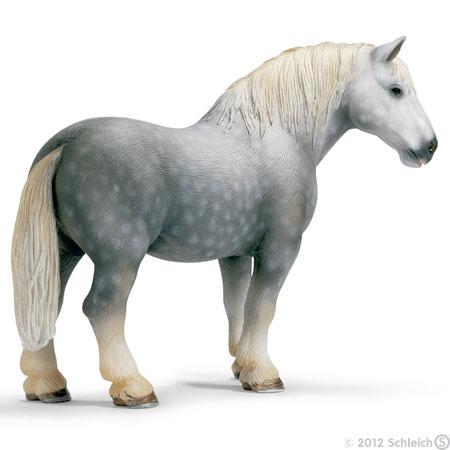 File:Percheron Stallion.jpg