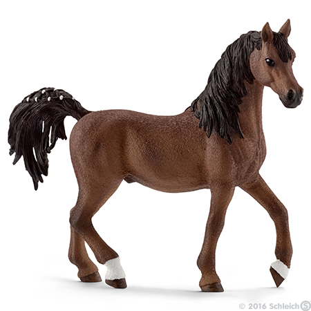 File:Arabian Stallion 2016.jpg