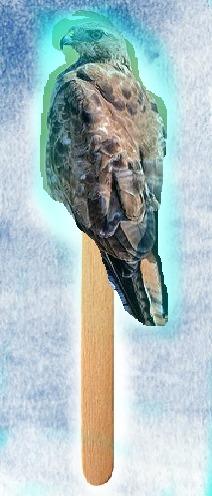 Hawkcicle