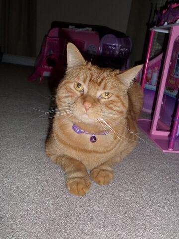 File:GINGER THE KILLER CAT.jpg