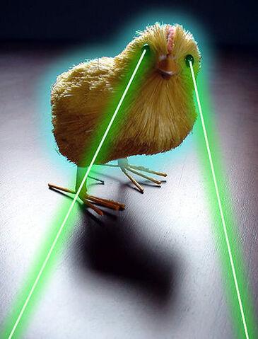 File:H chick .jpg