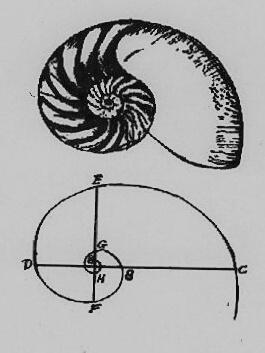 Datei:Nautilus.JPG