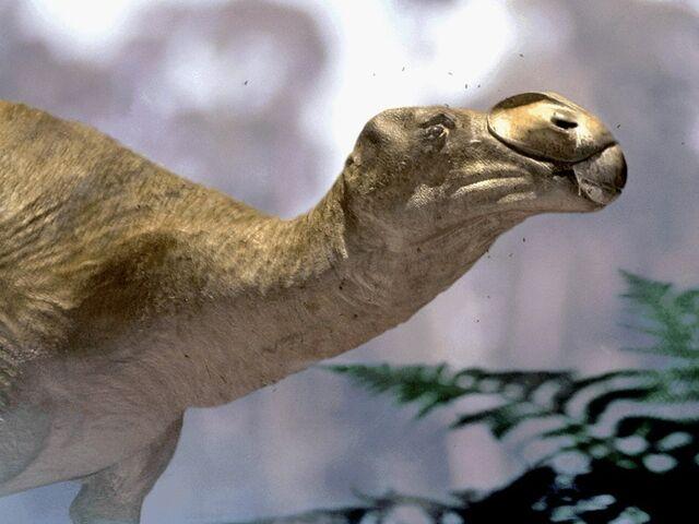 File:Muttaburasaurus.jpg